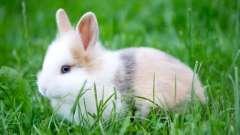 Алергія на кроликів