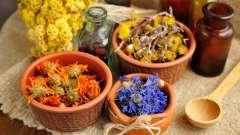 Аптекарський город: лікарські рослини, які можна виростити на дачі