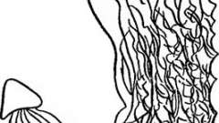 Зміна рельєфу слизової оболонки шлунка