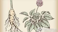 Як нас лікують рослини