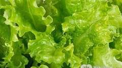 Калорійність салату