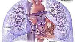 Легеневе серце