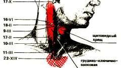 Мікромасаж при хронічному тонзиліті