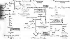 Порушення метаболізму амінокислот - гістидин - спадкові і вроджені хвороби плода та новонародженого