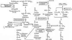 Порушення метаболізму амінокислот - гліцин - спадкові і вроджені хвороби плода та новонародженого