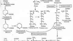 Порушення метаболізму амінокислот - лізин - спадкові і вроджені хвороби плода та новонародженого