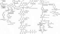 Порушення метаболізму амінокислот - тирозин - спадкові і вроджені хвороби плода та новонародженого