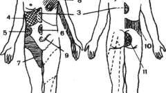Нервова система - анатомо-фізіологічні основи масажу, механізм його дії на організм