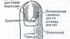 Нігті - системи організму (гістологія)