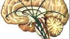 Загальний принцип функціонування нервової системи - дитяча неврологія