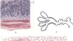 Органи дихання - основи гістології