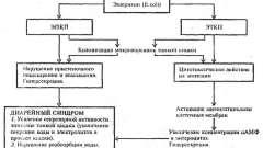 Патогенез - гострі кишкові інфекції у дітей