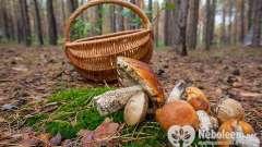 Поговоримо про плюси і мінуси грибів