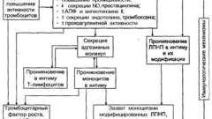 Роль імунологічних механізмів у розвитку атеросклерозу - патоморфологія і патогенез атеросклерозу