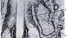 Сальні залози - системи організму (гістологія)