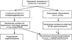 Скупчення лейкоцитів і утворення пінистих клітин - патоморфологія і патогенез атеросклерозу