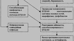 Урогенітальний хламідіоз - діагностика і лікування інфекцій жіночих статевих органів