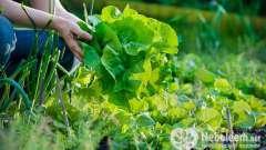 Смачно і корисно: продукти для очищення організму