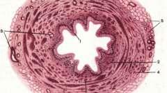 Видільна система - основи гістології