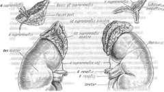 Захворювання надниркових залоз - ендокринологія