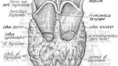 Захворювання щитовидної залози - ендокринологія